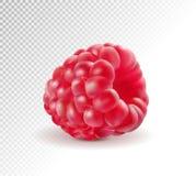 Frambuesas maduras aisladas en fondo transparente Vector realista de la calidad illustraton 3d ilustración del vector