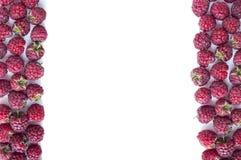 Frambuesas maduras en el fondo blanco Frambuesas en la frontera de la imagen con el espacio de la copia para el texto Diversas ba imágenes de archivo libres de regalías