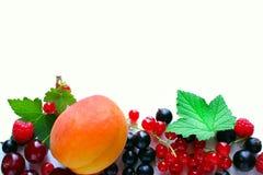 Frambuesas maduras y cereza de la grosella negra de la pasa roja en un fondo blanco Fotos de archivo libres de regalías