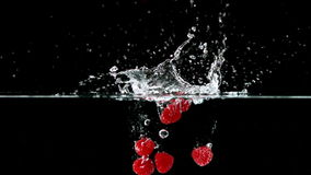 Frambuesas que caen en agua en fondo negro metrajes