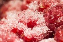 Frambuesas rojas congeladas macras Imágenes de archivo libres de regalías