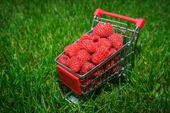 Frambuesas rojas en una carretilla miniatura de las compras en la hierba verde foto de archivo
