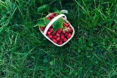 Frambuesas rojas en una cesta de madera en jardín Imágenes de archivo libres de regalías