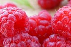 Frambuesas rojas maduras Foto de archivo libre de regalías