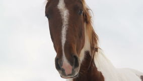 Framdel av hästhuvudet på vit bakgrund lager videofilmer