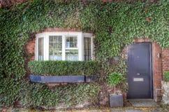 Framdel av huset som täckas av den gröna murgrönan Arkivbilder