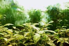Framdel för vattenfallexponeringsglasfönster av trädet arkivfoto