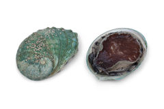 Framdel och baksida av en ny rå abalone Royaltyfri Fotografi