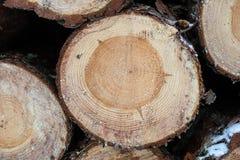 Framdelen av den wood journalen, når den har klippt med en makt, såg Trä s Arkivbild