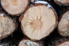 Framdelen av den wood journalen, når den har klippt med en makt, såg Trä s Arkivbilder