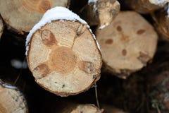 Framdelen av den wood journalen, når den har klippt med en makt, såg Trä s Royaltyfria Bilder