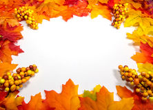 Frame – Fall Leaves. A frame of red and yellow fall leaves stock photography