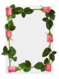 Frame 1 de Rosa Imagens de Stock
