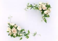 Frame-11 floral Fotografia de Stock Royalty Free