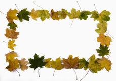 The frame. The frame, border from autumn maple leaves Stock Images