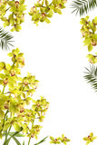 Frame. Beautiful fresh orchid and palm frond frame Royalty Free Stock Photos
