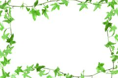 Frame. Green twisted plant frame isolated stock image