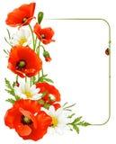 Frame 8 van de bloem. Papaver en Kamille Royalty-vrije Stock Foto's
