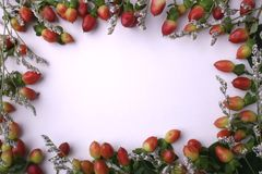 Frame. Fruit frame royalty free stock photos