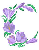 Frame from abstract crocuses Royalty Free Stock Photo