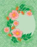 Frame abstrato das rosas Imagem de Stock