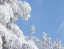 Frame abstrato do inverno Fotos de Stock