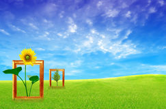 Frame Against Blue Sky And Green Grass Stock Photography
