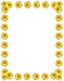 Frame amarelo da flor com espaço da cópia Fotografia de Stock Royalty Free