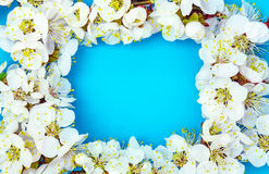 Frame from apricot blossom Stock Image