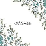 Frame with Artemisia vulgaris, border common wormwood hand drawn vector illustration isolated on white, Also called. Absinthium, absinthe wormwood, sagebrush royalty free illustration