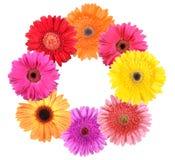 عالم الألوان frame-as-ring-flower