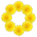 Frame as ring of yellow flowers Stock Image