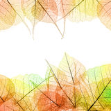 Frame of Autumn color transparent Leaves - isolated on white Royalty Free Stock Photos