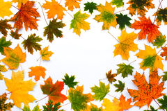 Frame of autumn fallen leaves on a white background Royalty Free Stock Images