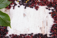 Frame of autumn fresh elderberry with leaf and copy space for text Royalty Free Stock Image
