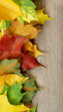 Frame of Autumn Leafs. Border of Variegated Autumn Fresh Leafs closeup on Textured Wooden background Stock Photos