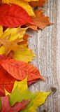 Frame of Autumn Leafs Royalty Free Stock Images