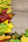Frame of Autumn Leafs. Border of Various Multi Colored Autumn Leafs closeup on Textured Wooden background Stock Image