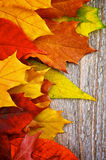 Frame of Autumn Leafs Royalty Free Stock Photos