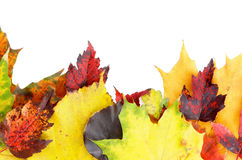 Frame of Autumn Leafs Stock Photo