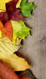 Frame of Autumn Leafs. Vertical Frame of Various Colorful Autumn Maple and Aspen Leafs closeup on Textured Wooden background Royalty Free Stock Image