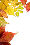 Frame from autumn leaves Stock Image