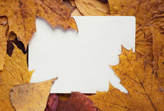 Frame from autumn leaves Royalty Free Stock Images