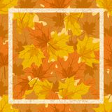 The frame of autumn leaves Royalty Free Stock Photography