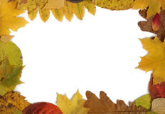 Frame from autumn leaves. Royalty Free Stock Image