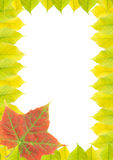 Frame (Autumn leaves). On isolated background royalty free stock images