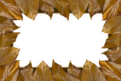 Frame of autumn leaves Stock Image