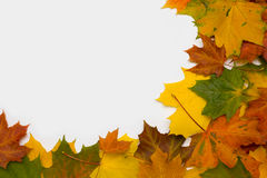 Frame from autumn leaves. Framework from autumn multi-coloured maple leaves Stock Photography