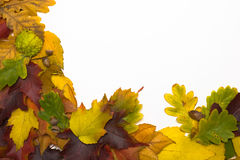 Frame from autumn leaves. Framework from autumn multi-coloured  leaves Stock Photo