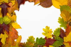 Frame from autumn leaves. Framework from autumn multi-coloured  leaves Stock Photography